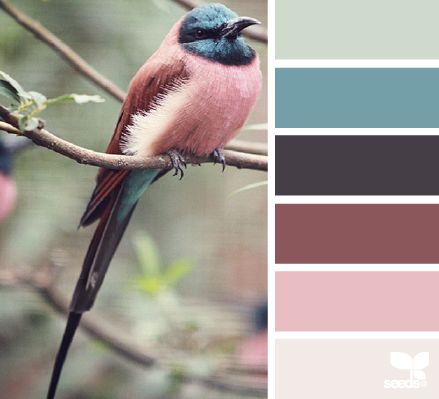 design-seeds-color-2016