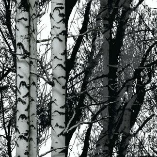Autocolant alb negru - Mesteceni Catalog
