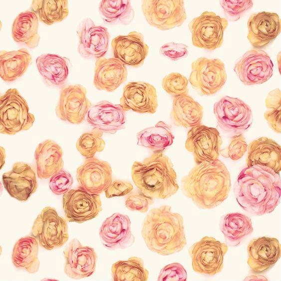 Autocolant trandafiri Rosedale Catalog