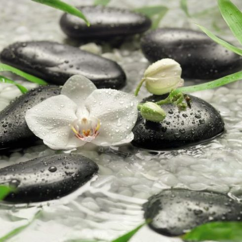 Fototapet Orhidee – Puritatea Albului