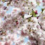 8-507_spring_web