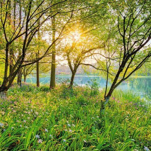 Fototapet natura - Stralucirea Padurii Catalog