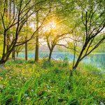 Fototapet Natura Stralucirea Padurii 8-524