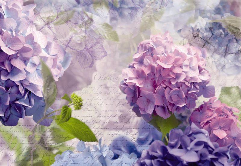 Fototapet Floral Hortensii Otaksa 8-705