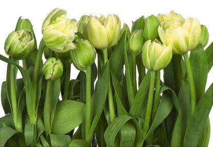Fototapet Floral Gradina de Lalele 8-900
