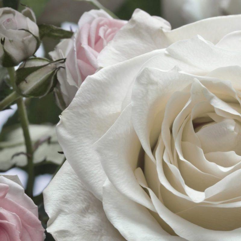 Fototapet floral buchet de trandafiri detaliu