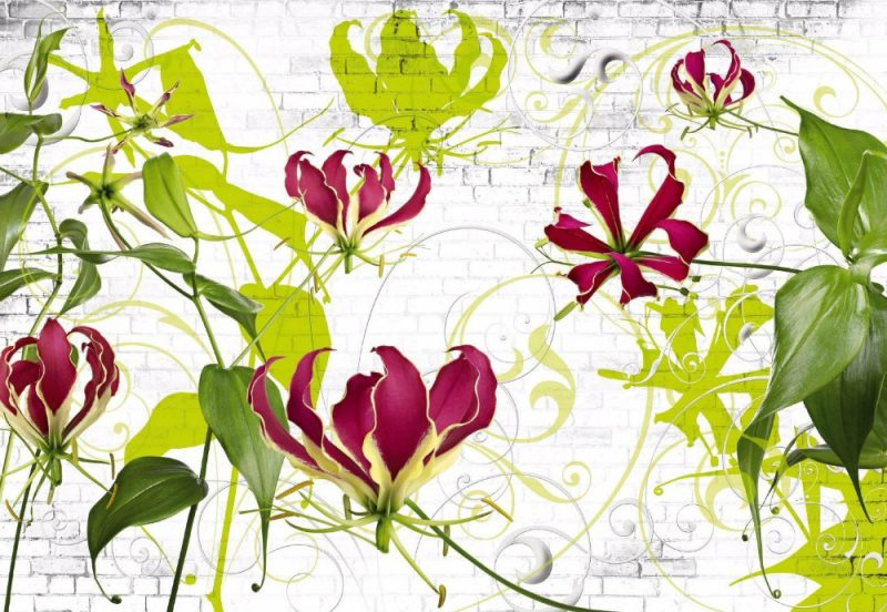 Fototapet Floral Crini Gloriosa Superba Produs