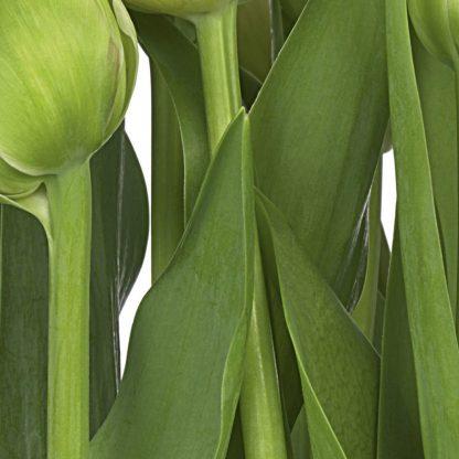 Fototapet Floral Gradina de Lalele detaliu 8-900