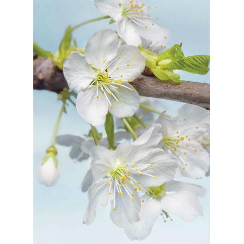 Fototapet cu flori albe