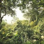 Fototapet Padure Tropicala Vlies