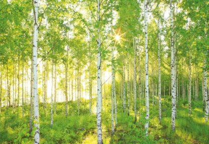 Fototapet Peisaje - Padure de Mesteceni produs