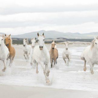 Fototapet Cai Libertatea Animalelor Catalog