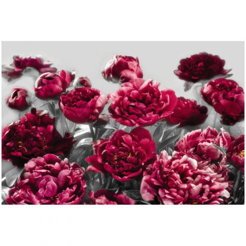 Fototapet bujori rosii