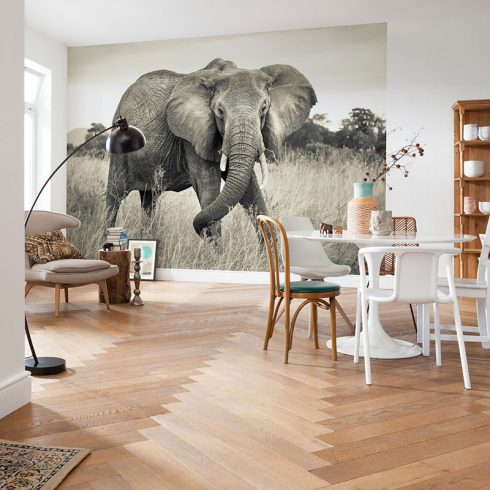 Fototapet elefant african Vlies