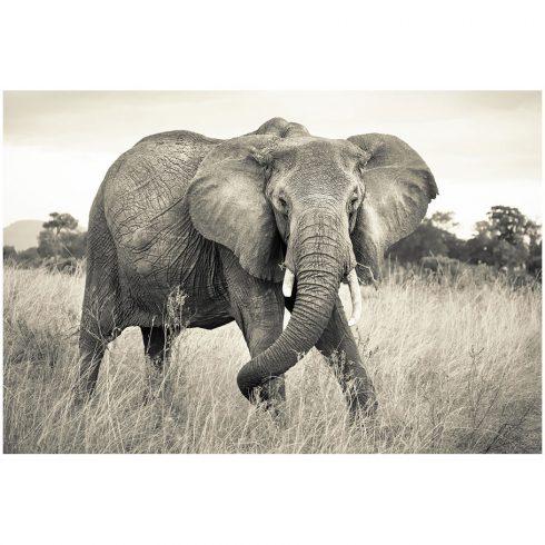 Fototapet elefant african