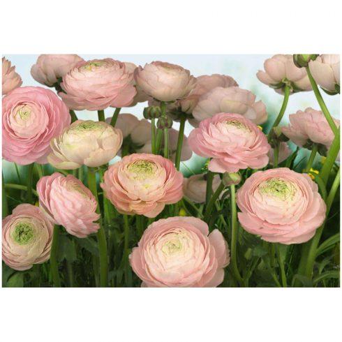 Fototapet floral Flori Buttercups
