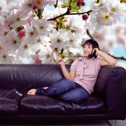Fototapet flori de cires - Primavara