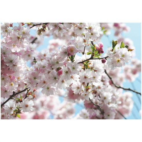 Fototapet flori de cires Primavara