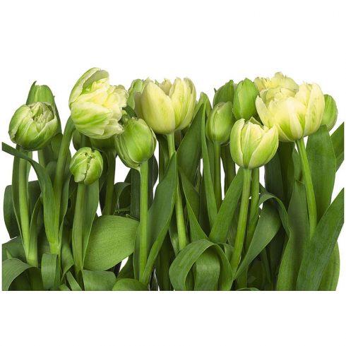 Fototapet lalele - Gradina de flori