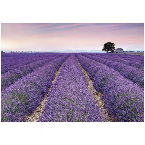 Fototapet lavanda Provence Vlies