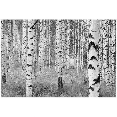 Fototapet mesteceni alb negru
