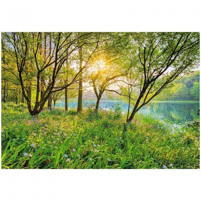 Fototapet natura - Stralucirea padurii