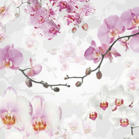 Fototapet orhidee albe si roz - Catalog