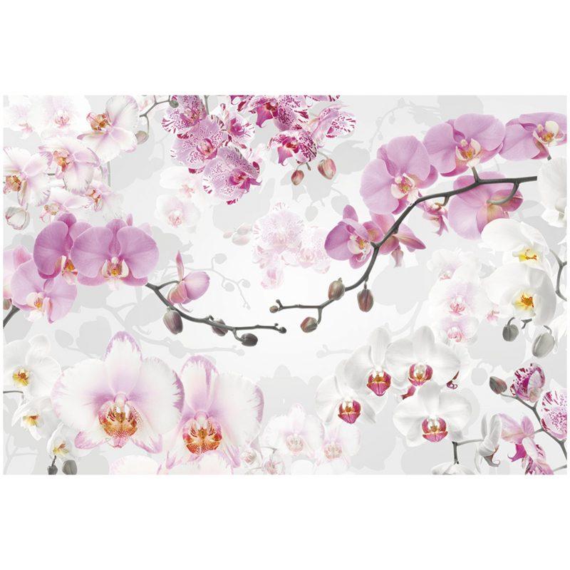 Fototapet orhidee albe si roz