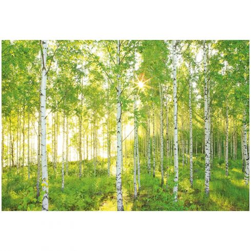 Fototapet peisaje - Padure de mesteceni