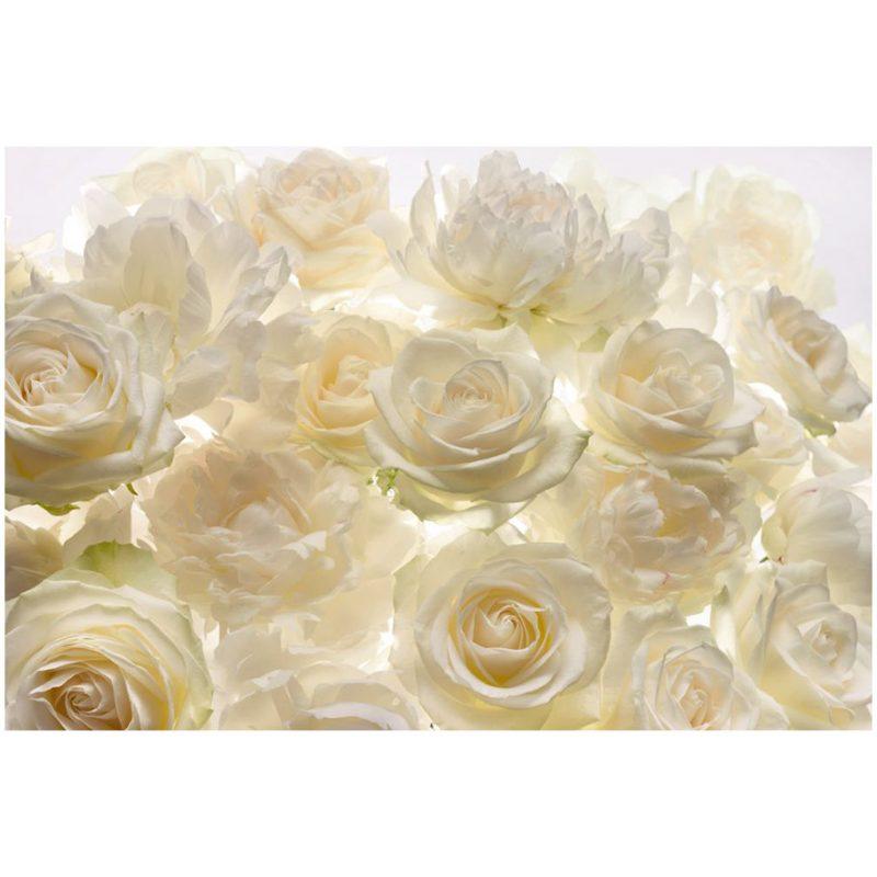 Fototapet trandafiri albi Aroma de Shalimar