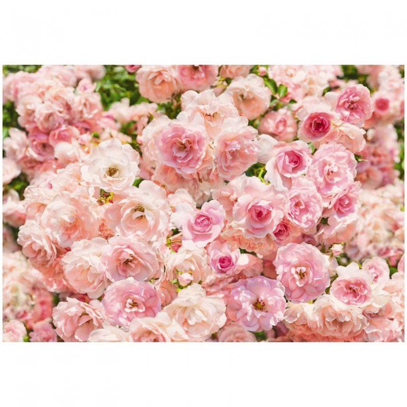 Fototapet trandafiri roz sublim