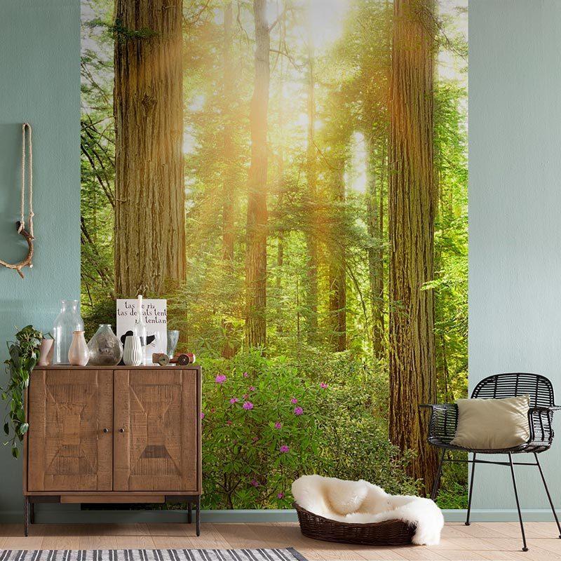 Fototapet padure de Sequoia Vlies
