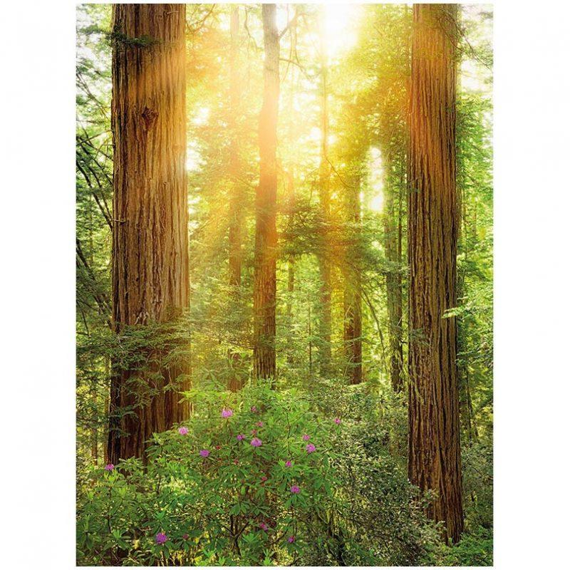 Fototapet natura de sequoia