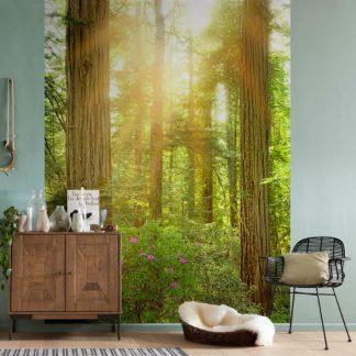 Fototapet Padure de Sequoia Interior