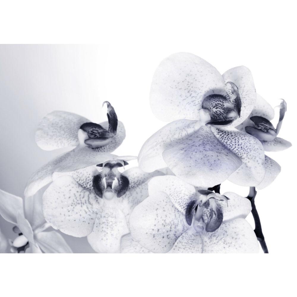 Fototapet Orhidee Alb Negru Catalog