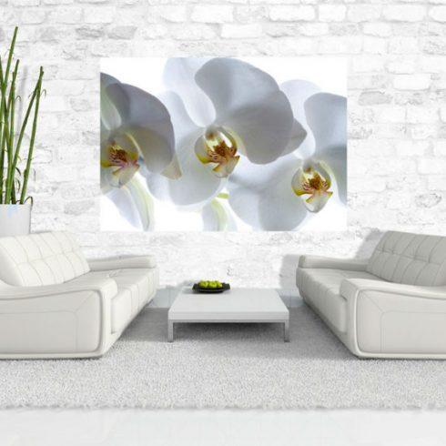Fototapet Orhidee Albe Ambient