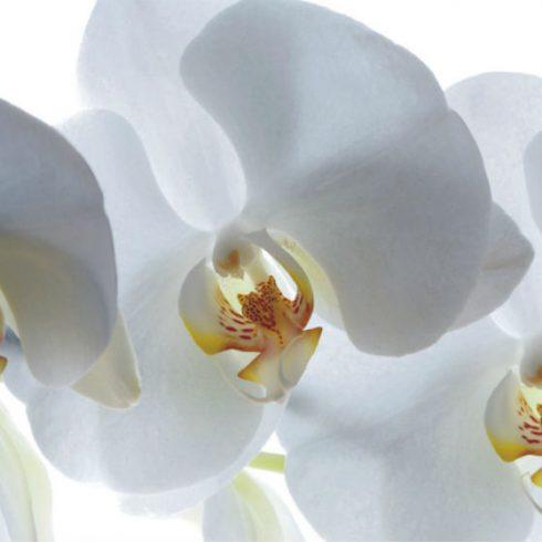 Fototapet Orhidee Albe - Catalog