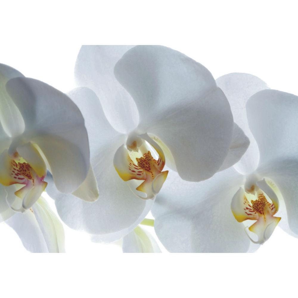 Fototapet Orhidee Albe Catalog