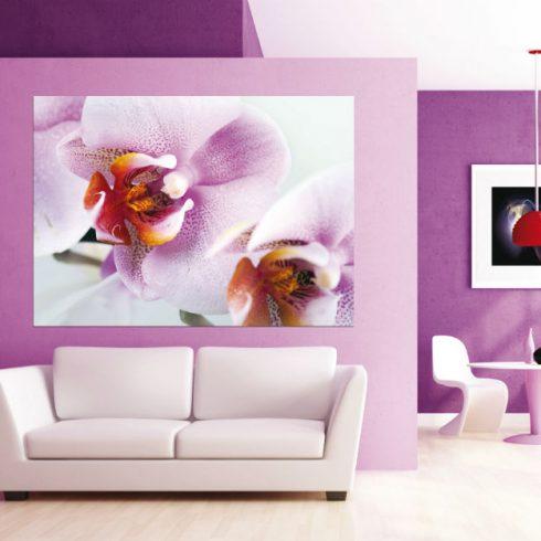 Fototapet Orhidee Delicate - Ambient