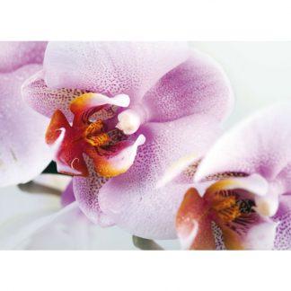 Fototapet Orhidee Delicate Catalog