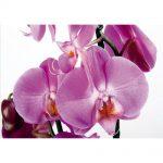 Fototapet Orhidee Violet Catalog