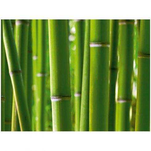 Fototapet bambus verde proaspat