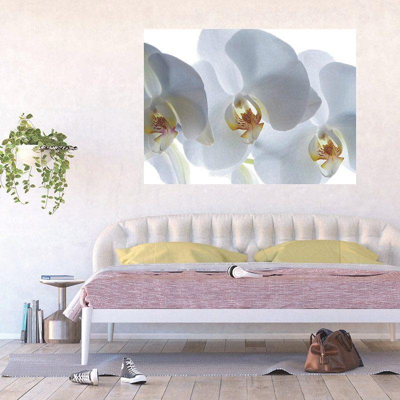Fototapet orhidee albe