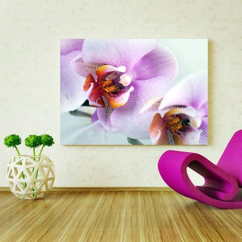Fototapet orhidee delicate