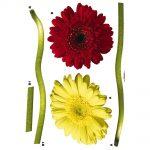 Sticker Flori - Margarete Colorate Catalog