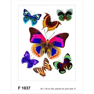 Sticker Fluturi Multicolori Catalog