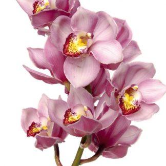 Sticker Orhidee Roz