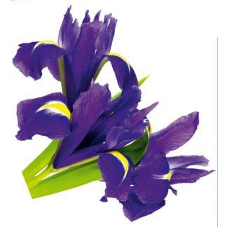 Sticker Perete Flori Iris