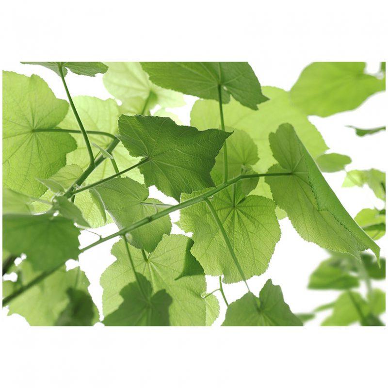 Fototapet verde cu frunze revigorante