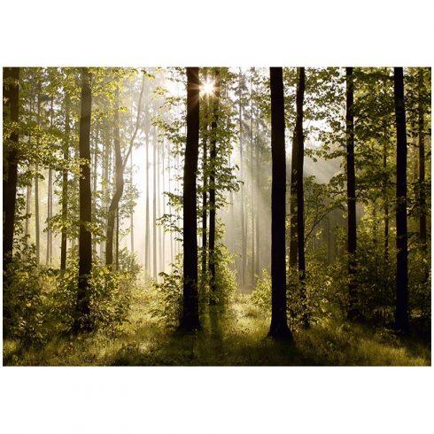 Fototapetb paduse - Splendoare dimineata